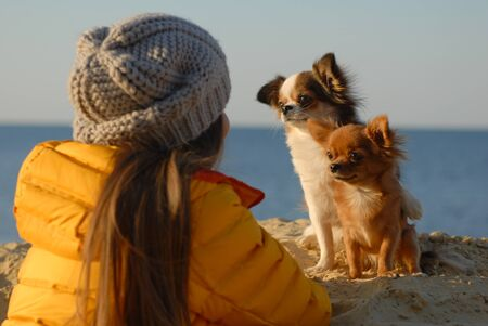 two funny little chihuahua dogs sitting on sand looking at their owner girl in woolen hat and yellow jacket during autumn leisure activity Stok Fotoğraf