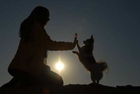 silhouette of active woman hand touching paw of her small chihuahua obedient canine dog high five during holiday leisure