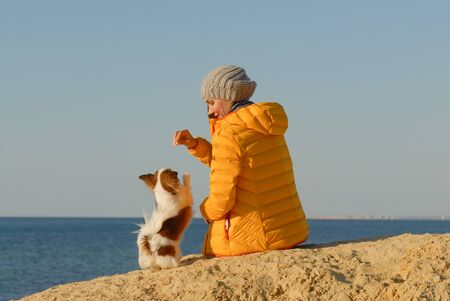 animal dog trainer in yellow jacket feeding her little dog during obedience training on sea shore on autumn sunset