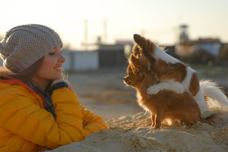 beautiful happy female dog owner in woolen hat and yellow jacket look at her two funny chihuahua dogs on autumn sand beach Stok Fotoğraf