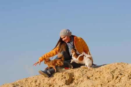 animal dog trainer young female in woolen hat and yellow jacket train her two small chihuahua dog on sand beach on blue sky backdrop