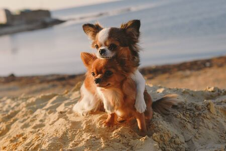 cute dog family concept mother embrace her puppy with love and care on sand summer ocean coast