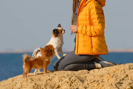 dog owner in yellow jacket sitting on knees with her two obedient small dogs on sand beach near sea Stok Fotoğraf
