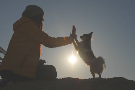silhouette of active woman hand touching paw of her small chihuahua canine dog high five during autumn holiday leisure