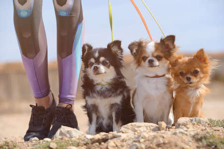 sport activy young female girl legs in sneakers holding leashed three little pet dogs chihuahua sitting on ground during outdoor leisure activity and obedience training Foto de archivo