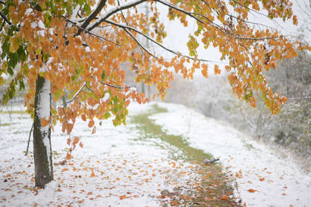 beautiful outdoors landscape of autumn tree and green grass trail covered with white pure snow Stock Photo