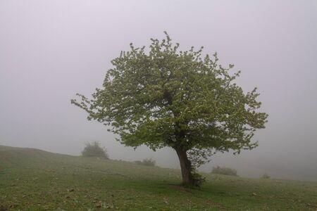 Mountain at Fog, Fog and Tree Iran, Gilan, Rasht One tree in fog at the mountain Stok Fotoğraf - 148229556