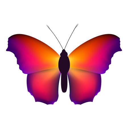白地にカラフルな翼を持つ美しい蝶。