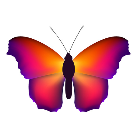Beautiful butterfly with colorful wings on a white background. Ilustração