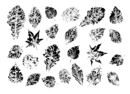 A set of leaves collected in the forest and printed in ink on white paper.