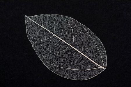 Skeletonized leaf of a plant. Natural materials for crafts. Top view with copy space, flat lay.