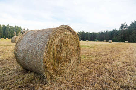 Haystacks in the field. Straw bales. Harvesting. Harvesting feed for the farm. Rural landscape. Countryside concept.