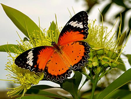 mariposa: Butterfly