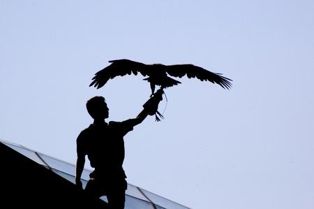 quietness: Eagle standing against a blue sky