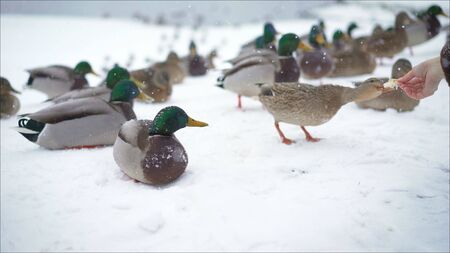 They feed the ducks in the winter .