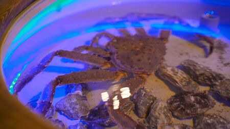 Live Kamchatka crabs in the restaurant aquarium, cooking fresh seafood. Fresh, lively crab in a restaurant.