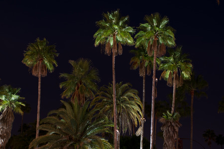 lit: Palm Trees lit with lights