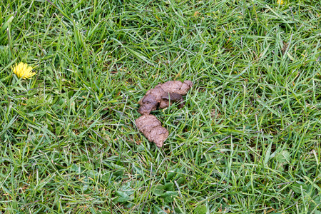 Dog Poo left on the grass
