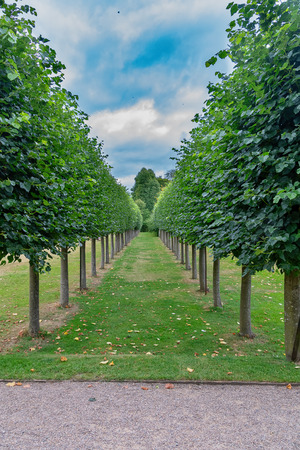 Avenue of trees in a straight line. Symentrical lines