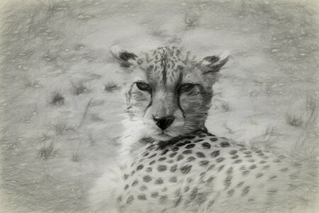 Portrait view of a female Cheetahs head