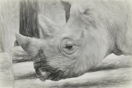 Close up portrait view of a black Rhino head