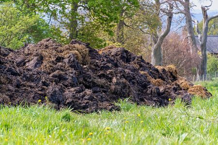 Large mound of cow manure in a field