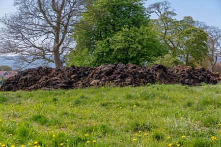 Large mound of cow manure in a field Standard-Bild - 145606685