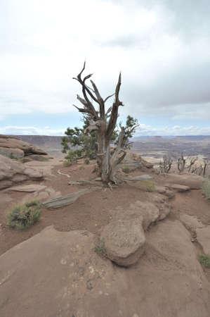 National Parks   natural wonders of Utah photo