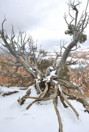 natural wonders: National Parks   natural wonders of Utah