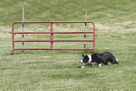 comrade: Lake Farmpark Working Dog Weekend (Kirtland, Ohio)