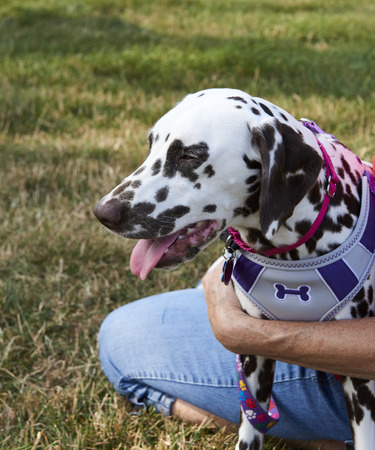 Paws 4 a Cause.  Annual dog rescue, protection and adoption event in Cleveland, Ohio