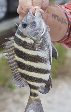 어부가 잡은 양잠 물고기 스톡 콘텐츠 - 77959842