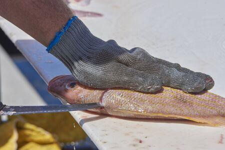 fisherman filleting fish on Sarasota Bay Harbor