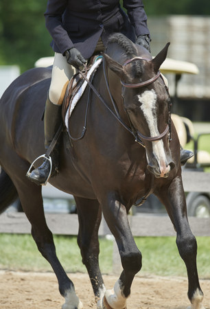 2018 HunterJumper Classic at Cleveland Metro Parks polo field in Moreland Hills, Ohio USA