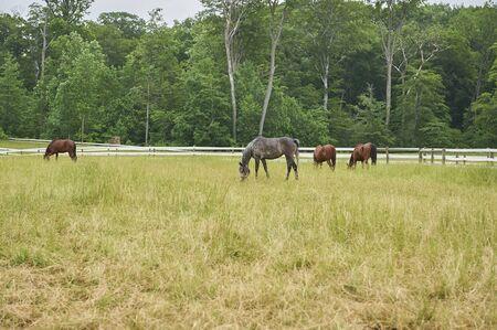 four horses grazing in pasture
