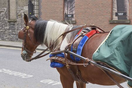 Ireland Trip (May 19-29, 2019) Dublin, Ireland.Guinness Beer Brewery. Carriage horse