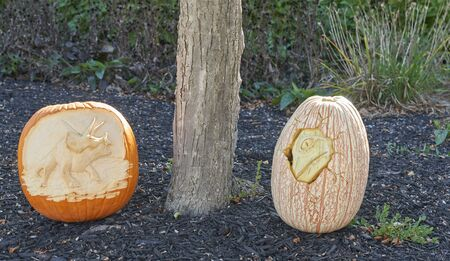 Dinosaur Pumpkin Carving Contest during Community Halloween Festival