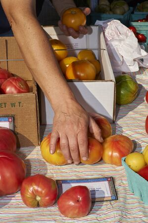 Street market.  Hand arranging tomatoes on table