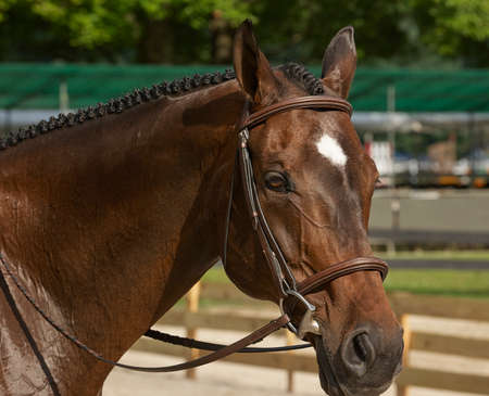 photo of horse looking at camera Banque d'images