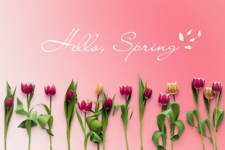 Hello Spring with tulips flatlay. Greeting card on the pink background. Flowers layout top view Фото со стока