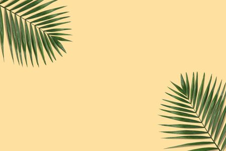 Summer minimal tropical banner. Green palm leaf on the yellow pastel background with copyspace Фото со стока
