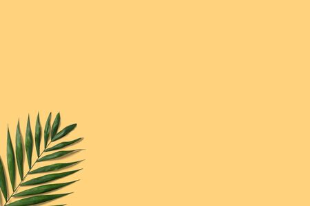 Summer minimal banner. Green palm leaf on the yellow pastel background with copyspace Фото со стока