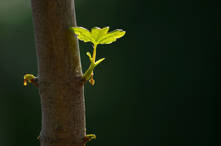 close up branch with young leaves in spring on a tree trunk Stock Photo