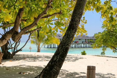 bungalows on a white beach with coconut palms on Maldives Island
