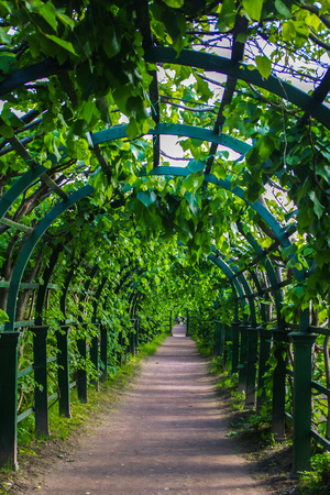 archways: a green archway in the park at summer. Green plant tunnel pergola with climbing plant Stock Photo