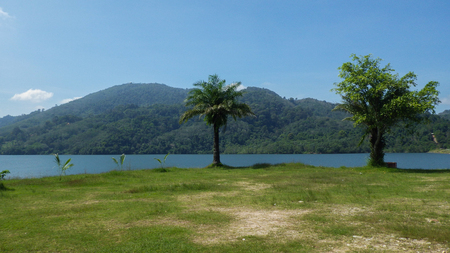 Palms or trees on a lake with hills in background