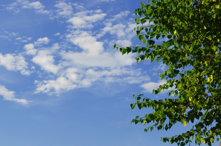 Green leaves and branches with blue sky in background
