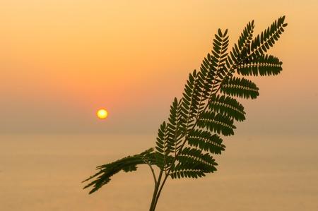 a tropical leaf or fern on sunset orange sun over the sea