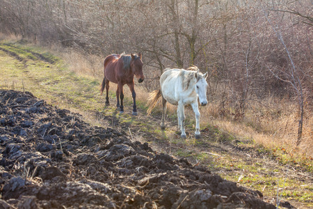 agricultural area: agricultural area with horses