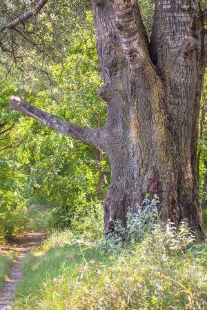 huge tree: huge tree